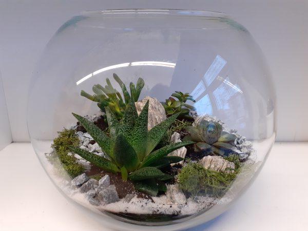 Sukulenty w szklanej kuli